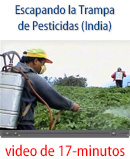 Escaping the pesticide trap (India)